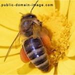 www.public-domain-image.com