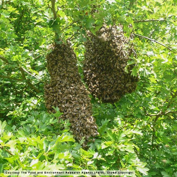 swarmnew
