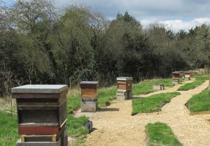 apiary 015A