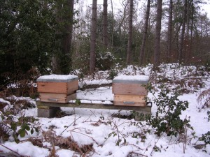 Bees in winter